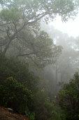 Forest of Canary island La Palma