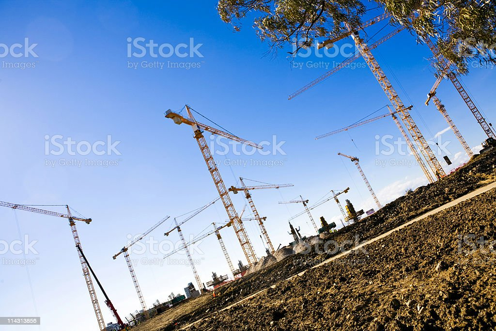 Forest of cranes royalty-free stock photo