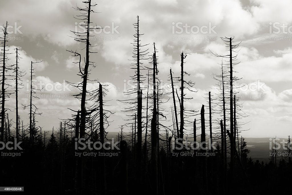 forest of dead trees stock photo