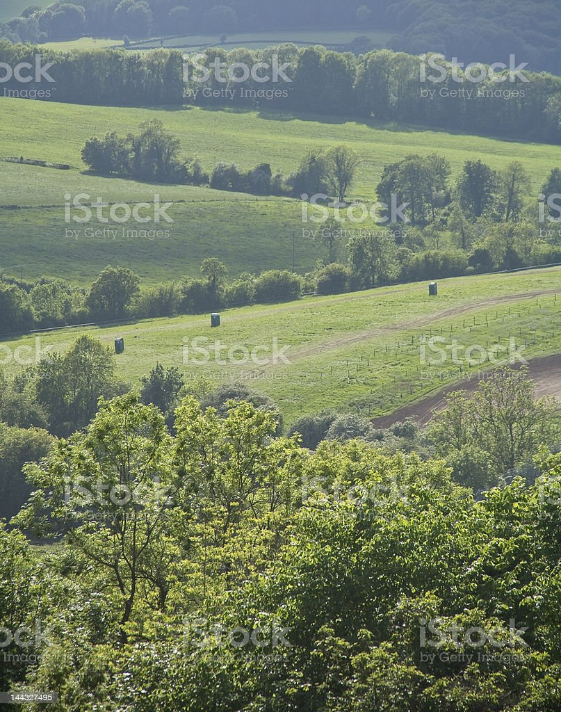 forest of dean stock photo