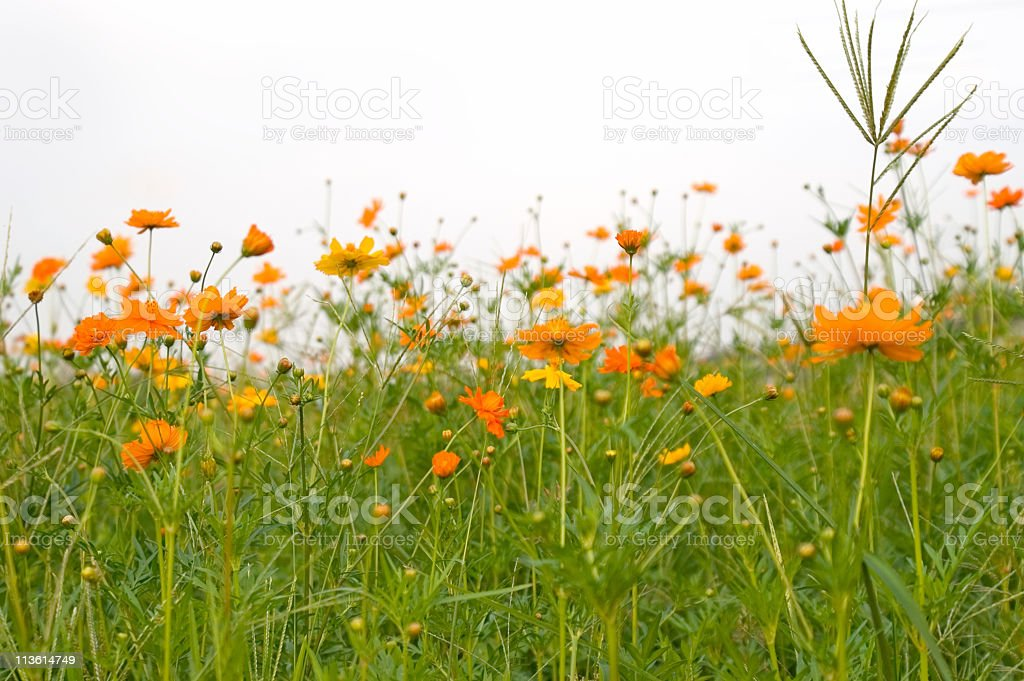 Forest of Flowers royalty-free stock photo