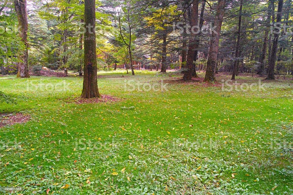 Forest of Karuizawa villa ground stock photo