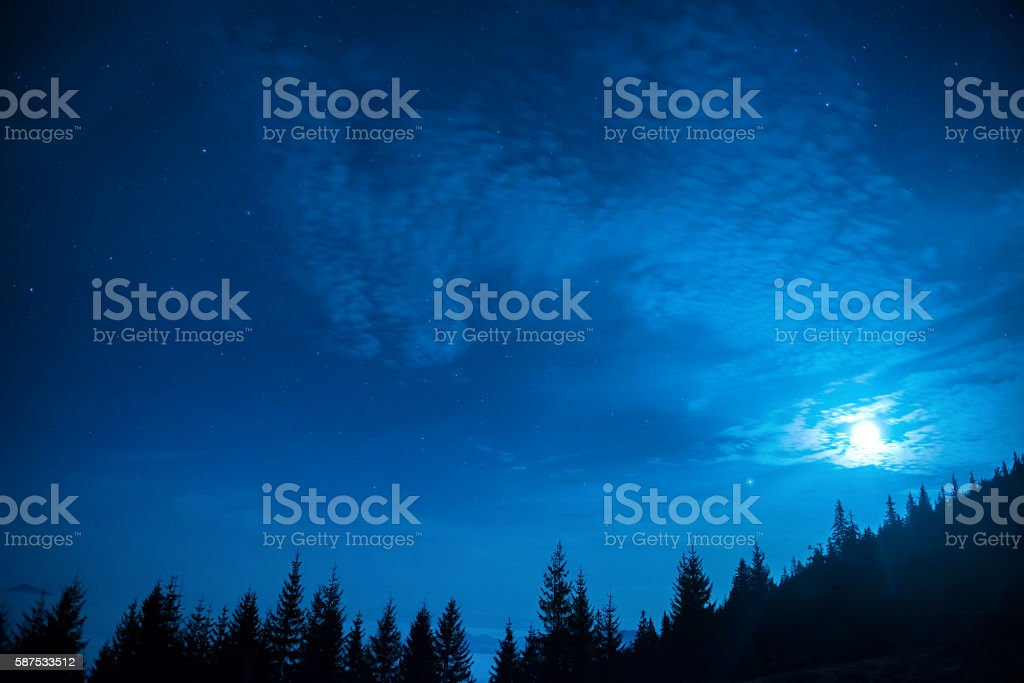Forest of pine trees under moon and blue night sky stock photo