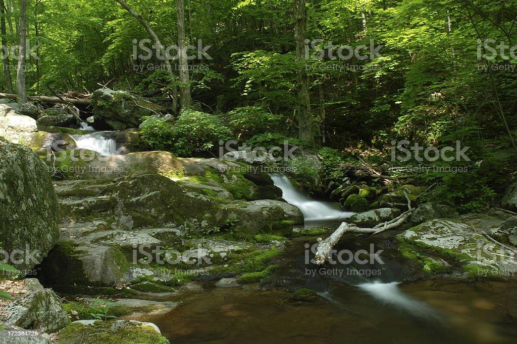 Forest of Shenandoah National Park royalty-free stock photo