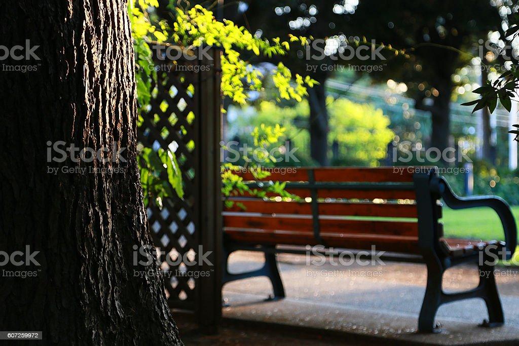 Forest of the setting sun foto de stock libre de derechos