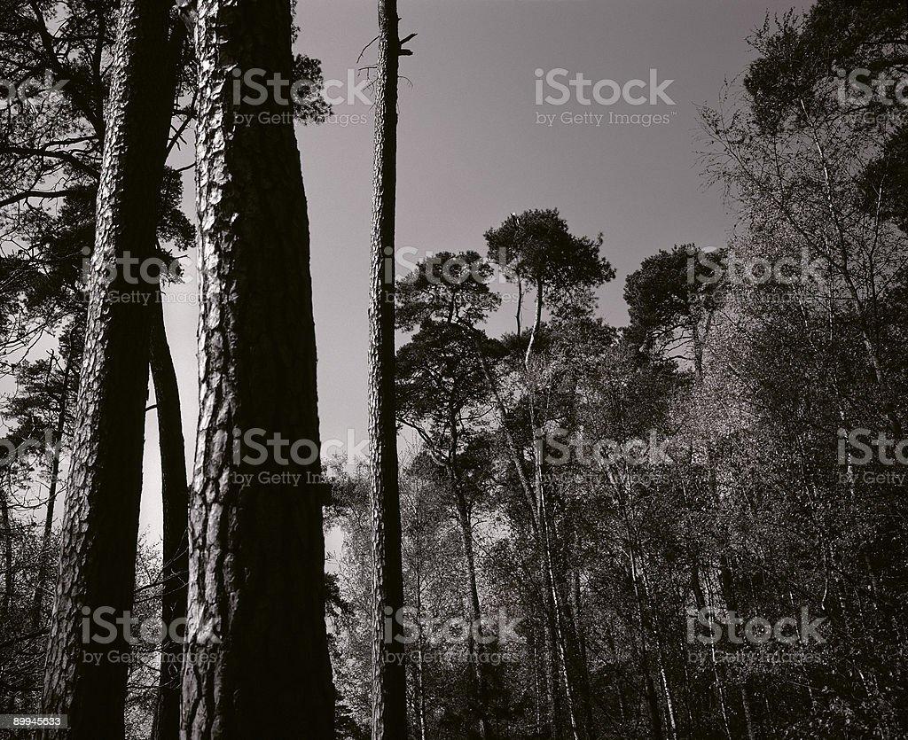 Forest, Oisterwijk, The Netherlands. stock photo