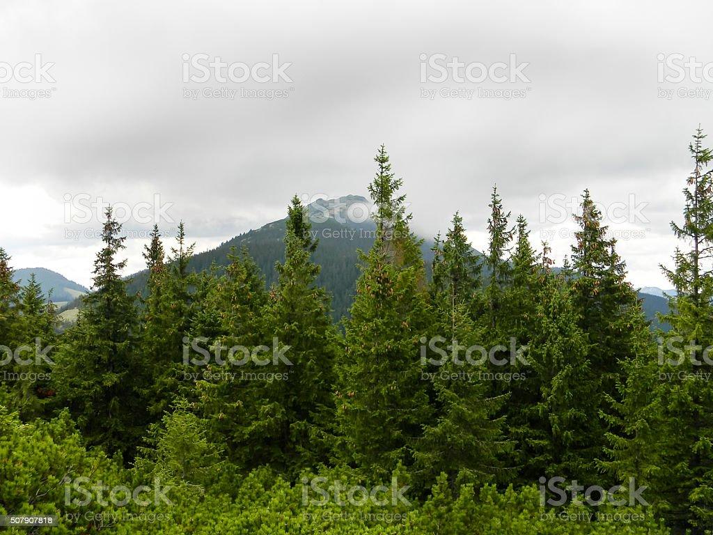 Bosque de montaña arriba foto de stock libre de derechos