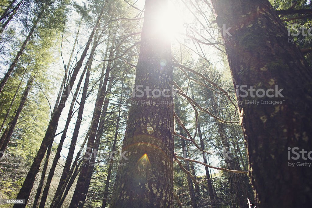Forest on a Summer Day stock photo