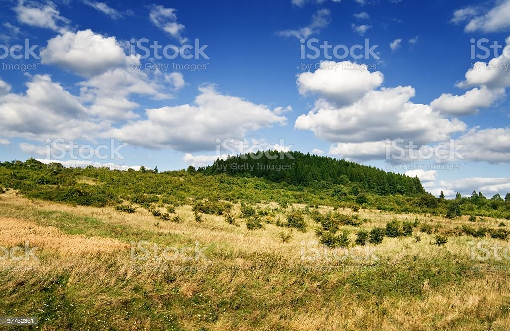 Forest on hill royalty-free stock photo