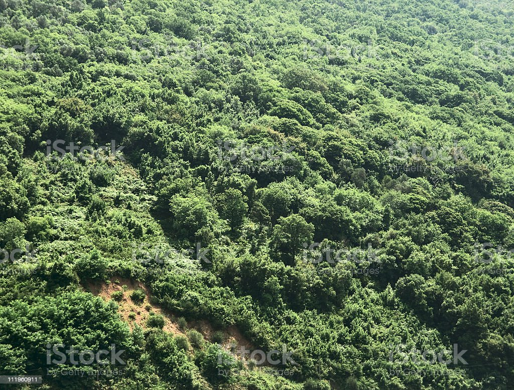 Forest on mountain stock photo