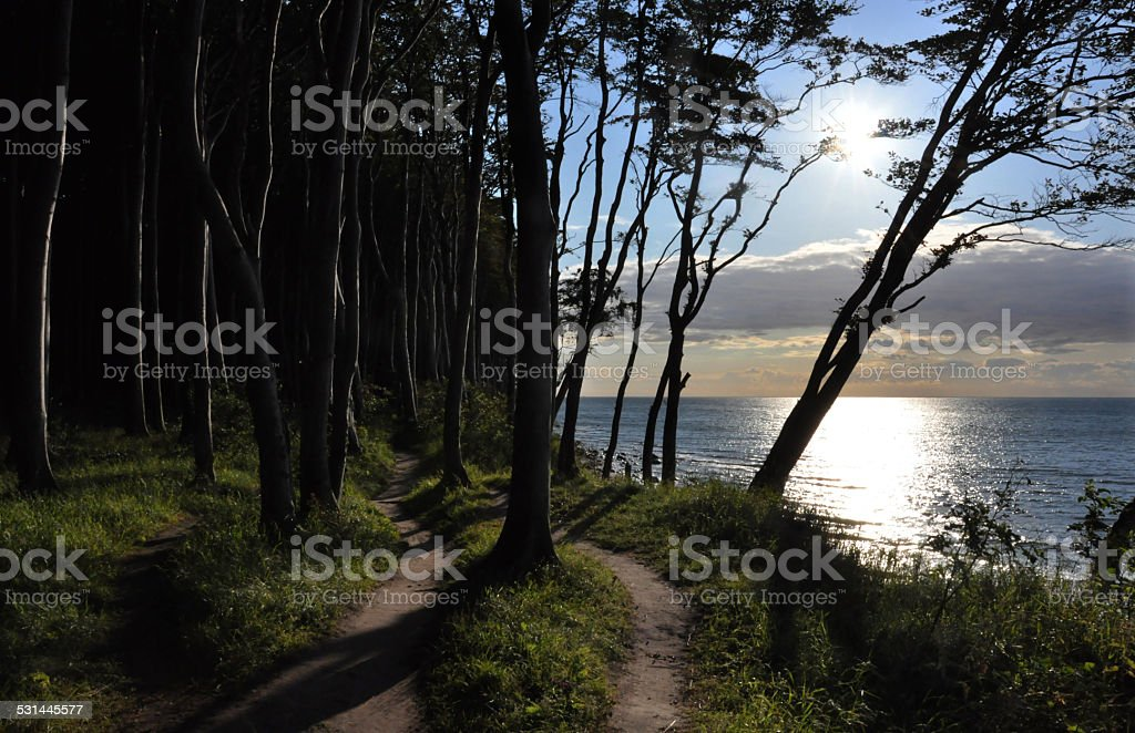 Forest on the Baltic Sea stock photo