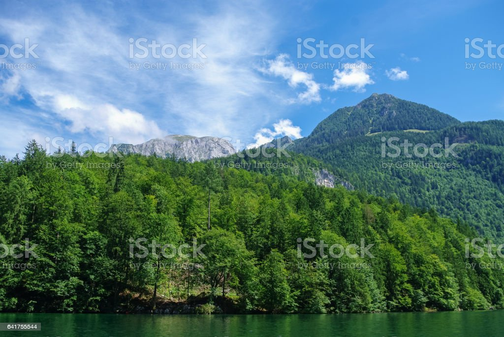 Forest on the bank of mountain lake Koenigssee, Bavaria, Germany stock photo
