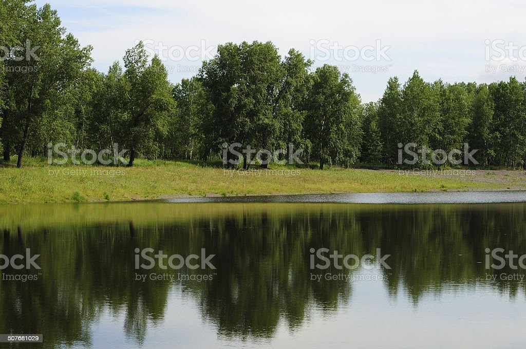 Forest on the lake. stock photo