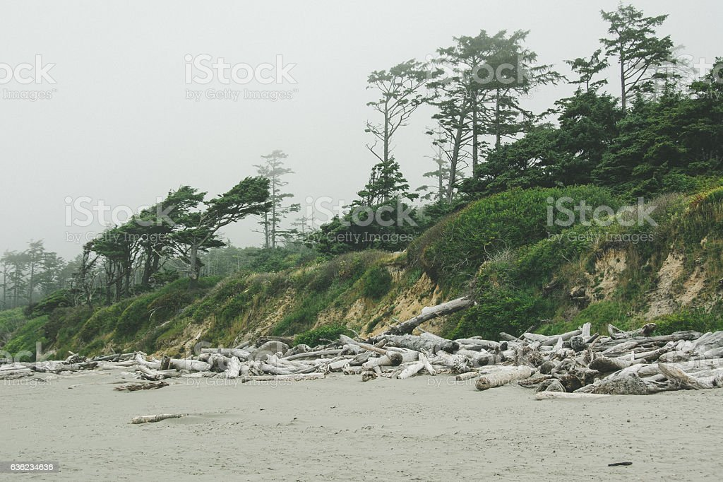 Forest on the Pacific coast on Kalaloch Campground, Washington USA stock photo