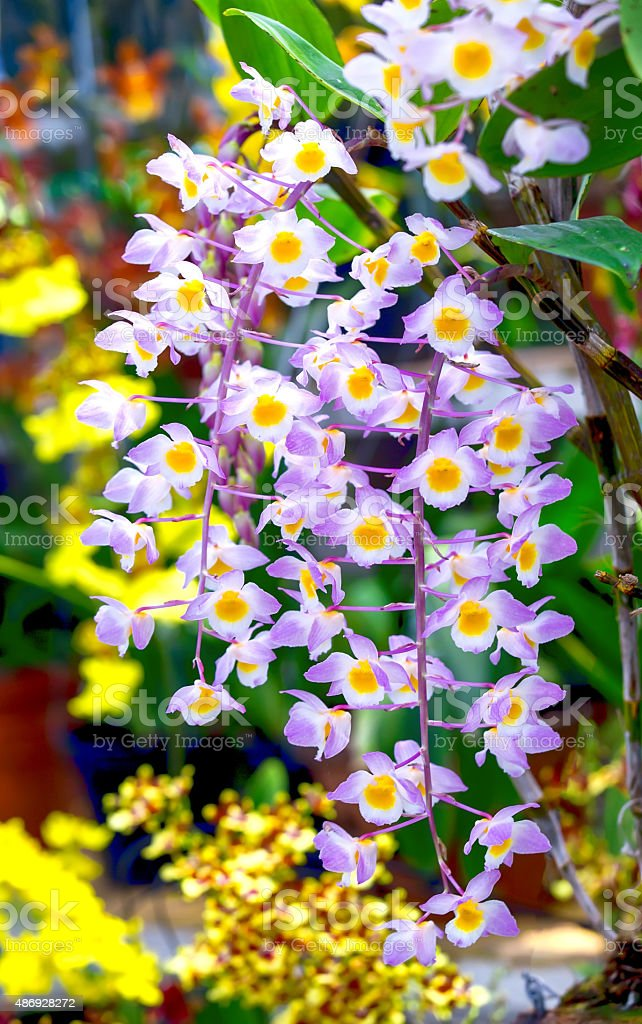 Forest orchids blooming flower garden party stock photo
