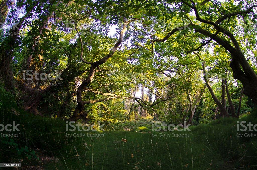 forest ornamental grasses stock photo