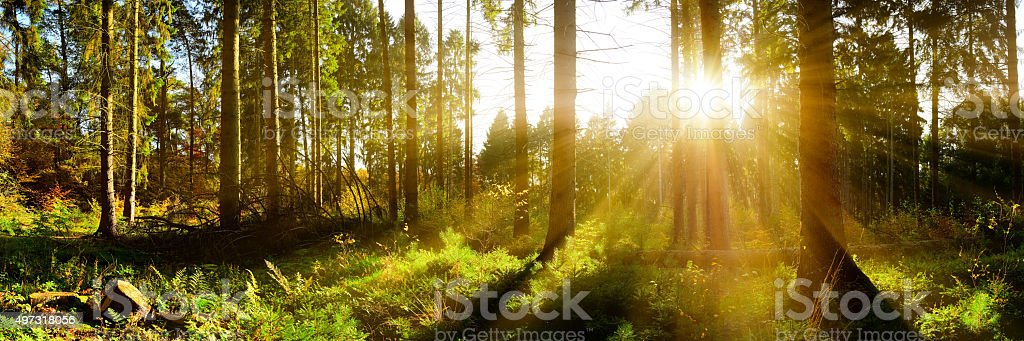 Forest Panorama in Autumn stock photo