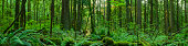 Forest Panoramic