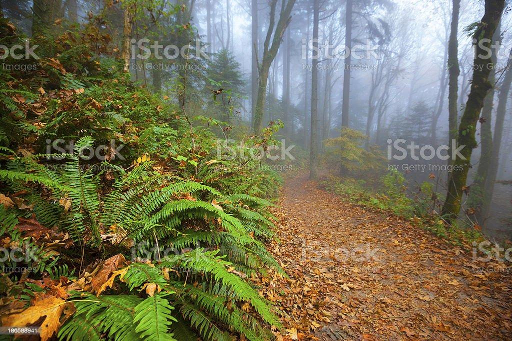 Forest Park Trail Portland stock photo