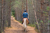 Forest path and rider