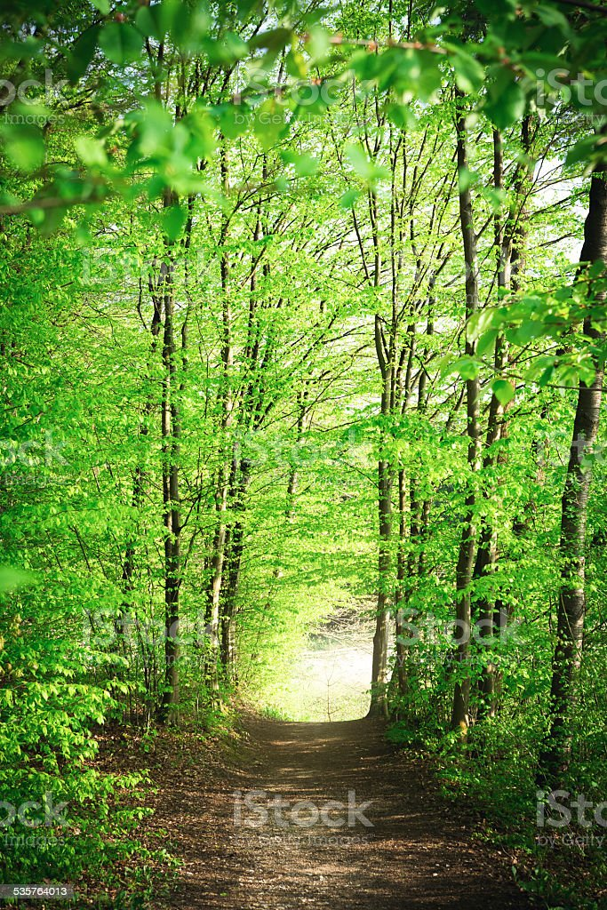 Forest Path At Spring stock photo