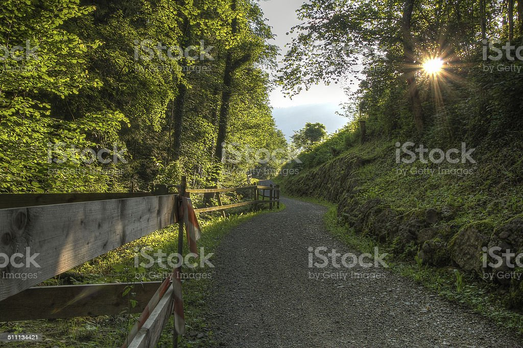 Forest path at sunset royalty-free stock photo