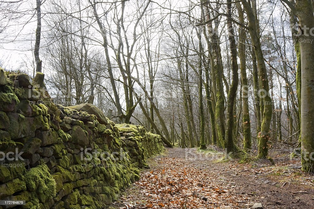 Forest Path By Dry Stane Dyke royalty-free stock photo