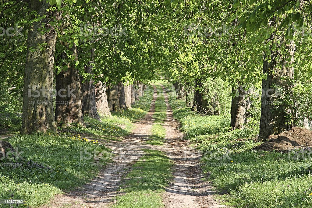 Forest Path, Chestnut Trees royalty-free stock photo
