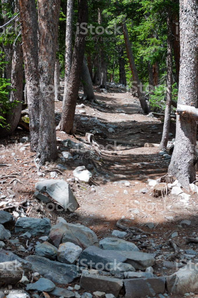 Forest path, Great Basin National Park, Nevada stock photo