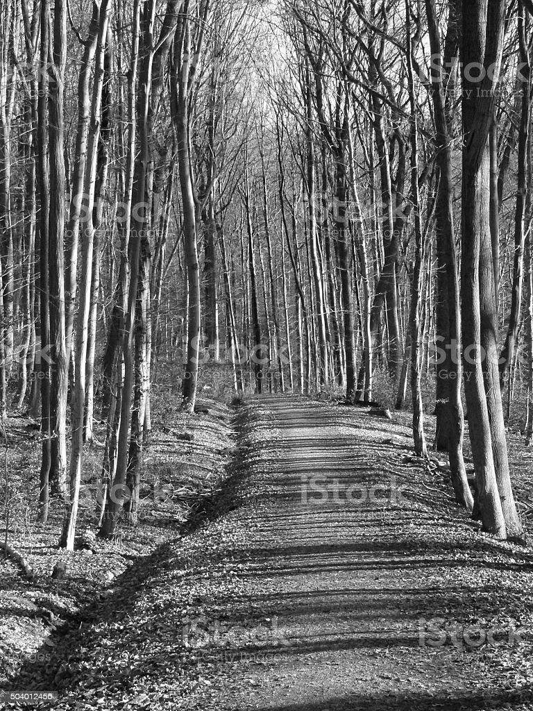 Waldweg in Schwarz-Weiß stock photo