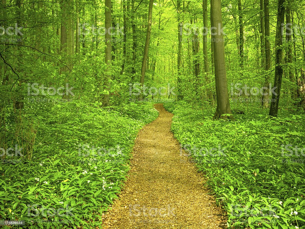 Forest Path in Spring royalty-free stock photo
