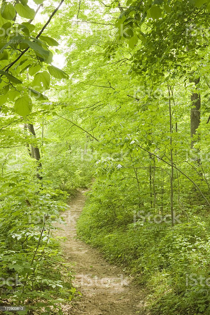 Forest Path In Summer royalty-free stock photo