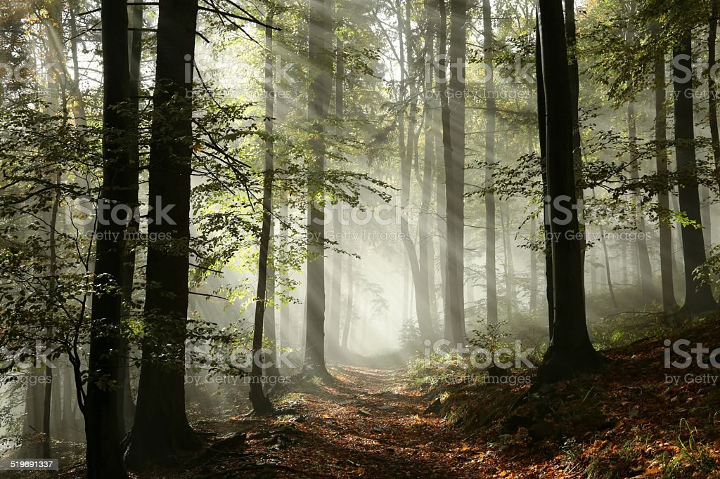 Forest path in the fog stock photo