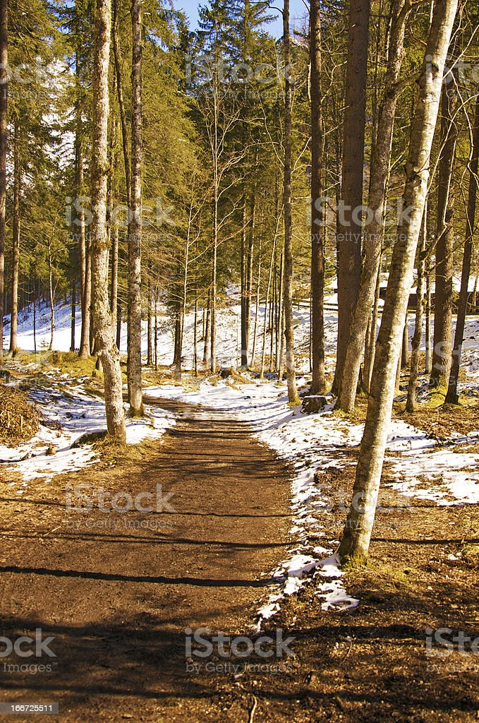 forest path on a sunny winter day royalty-free stock photo