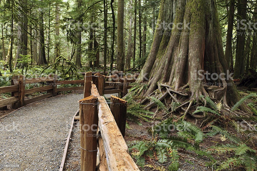 forest path royalty-free stock photo