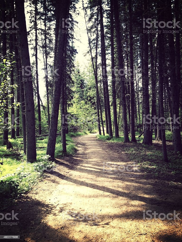 Forest Path stock photo