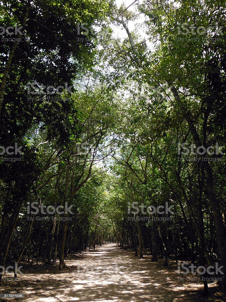 Forest Path Surrounding Coba Mayan Site stock photo