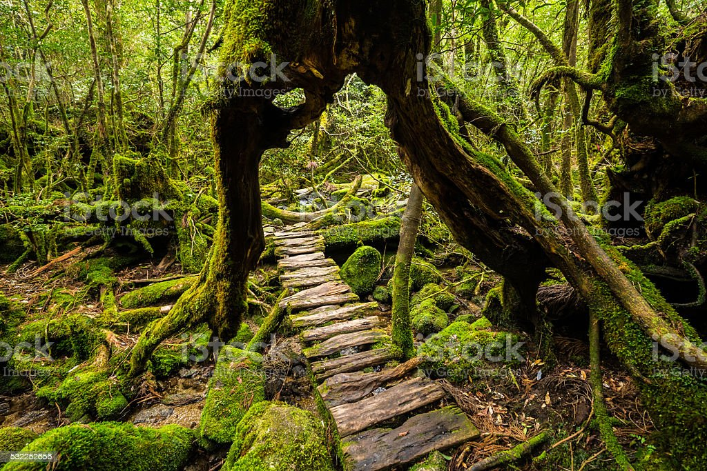 forest path under stock photo