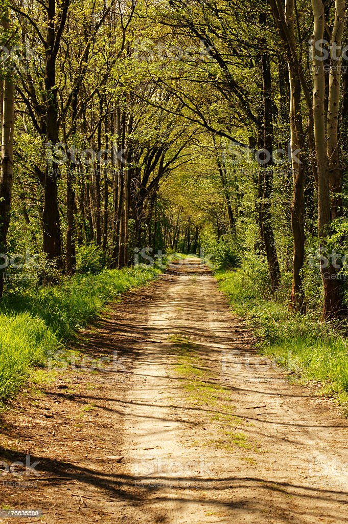 Forest path with shadow stock photo