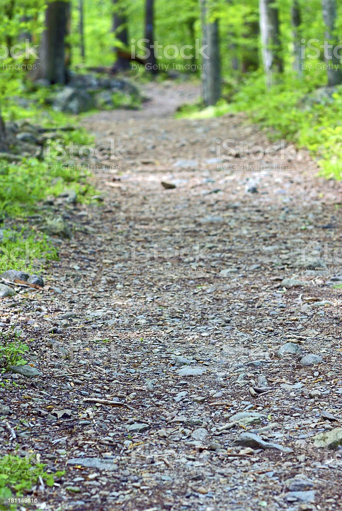Forest Pathway royalty-free stock photo