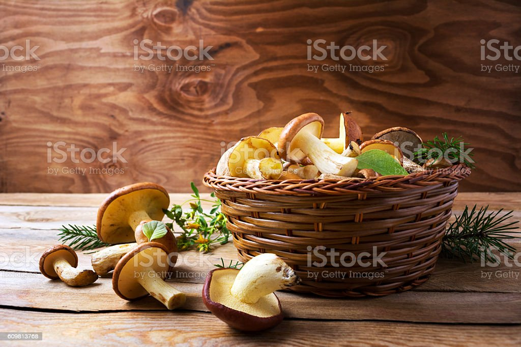 Forest picking mushrooms in wickered basket stock photo