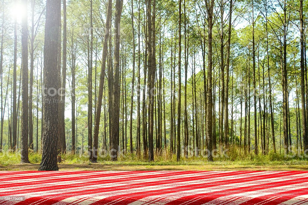 Forest picnic background. stock photo