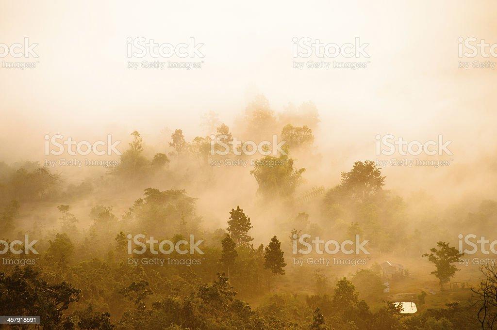 forest zbiór zdjęć royalty-free