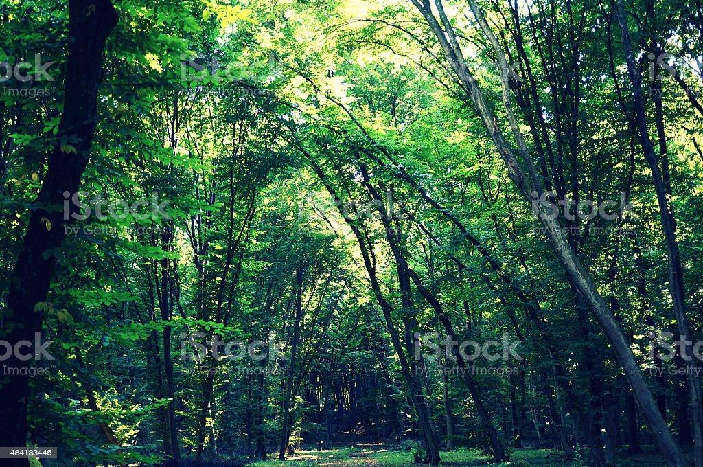 Floresta foto royalty-free