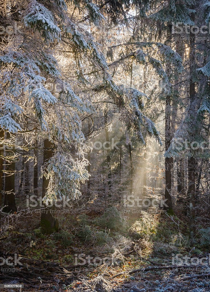 Forest stock photo