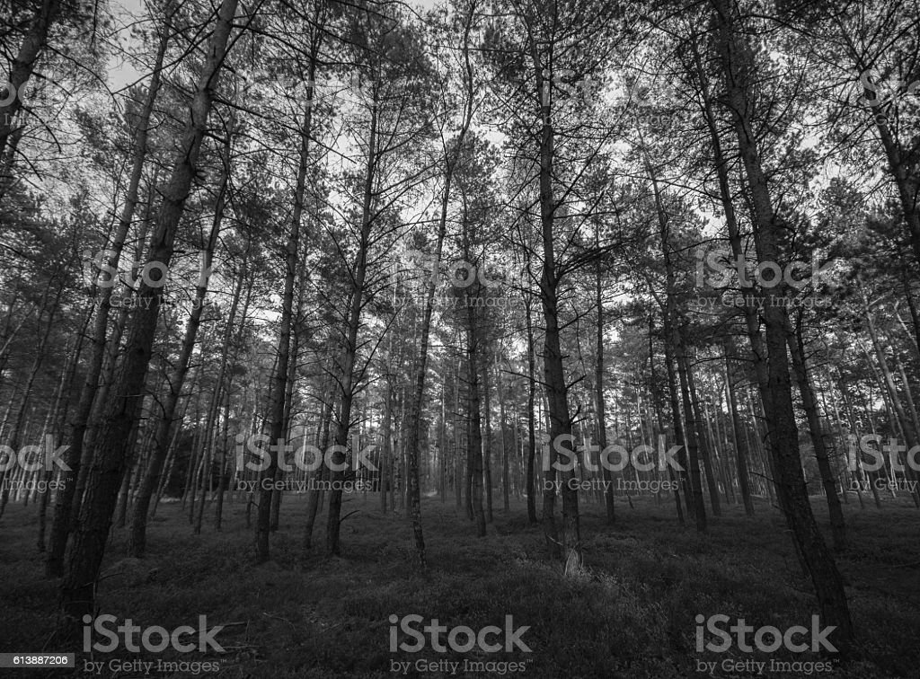 Forest. stock photo