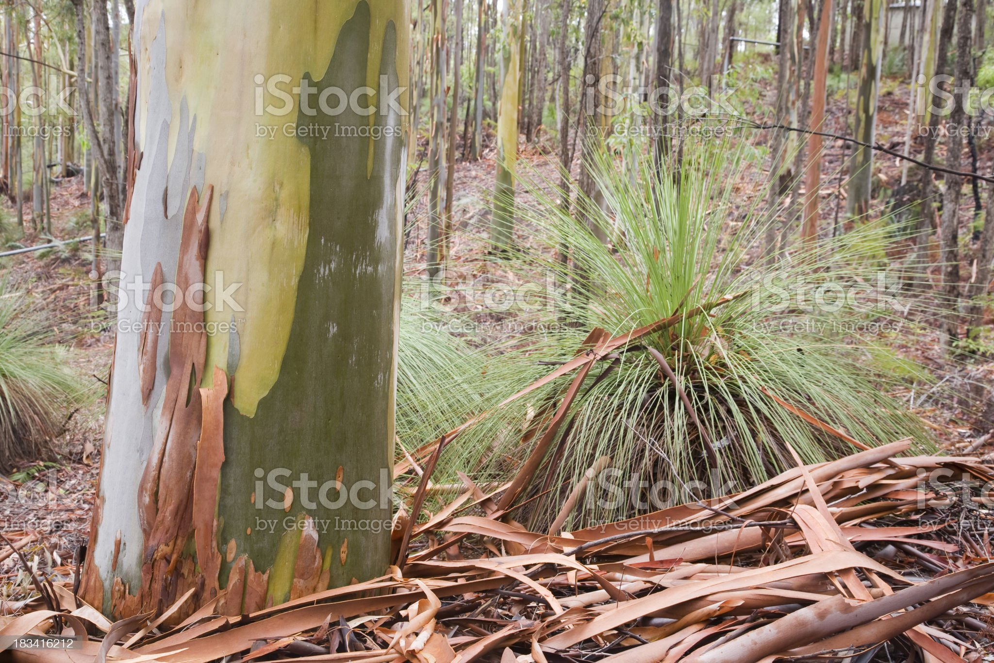 Forest Plants royalty-free stock photo