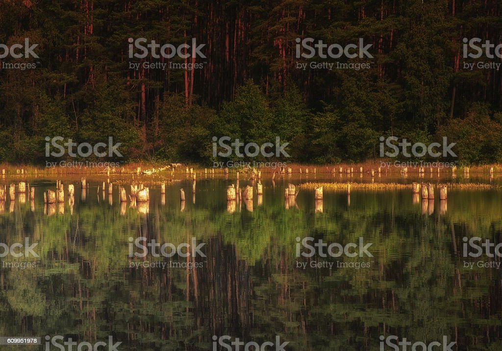 Forest pond in summer stock photo