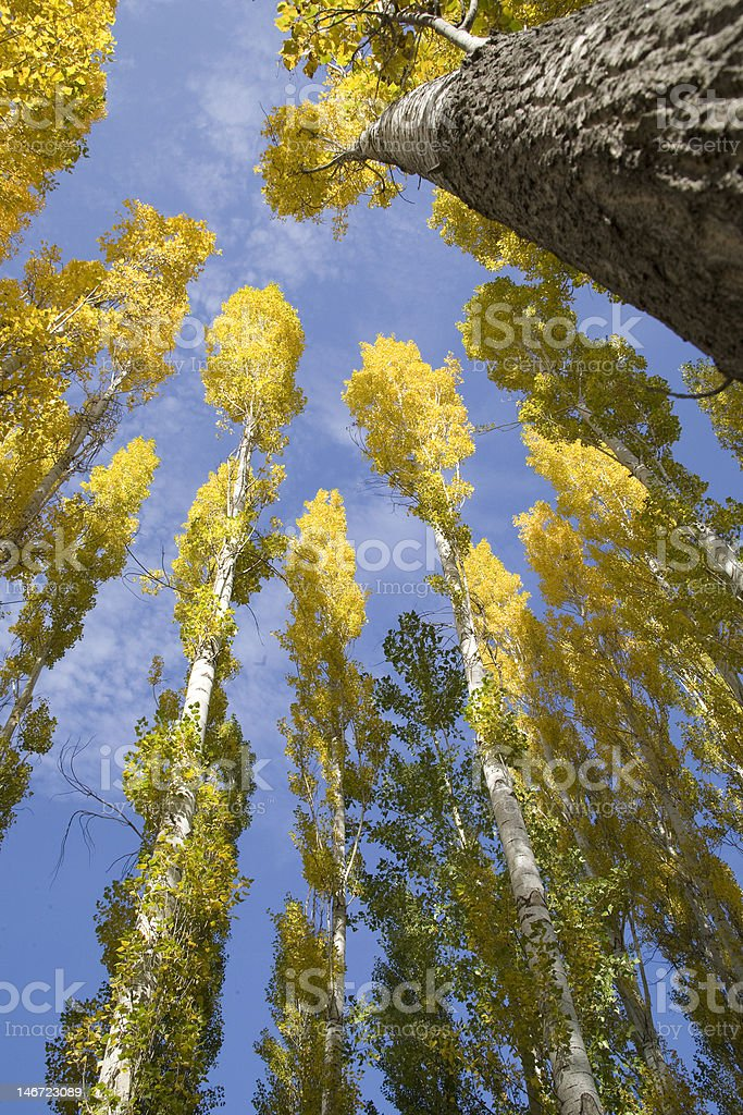 Forest Primeval stock photo