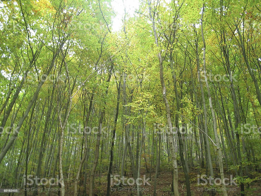 """Forest """"light"""" royalty-free stock photo"""
